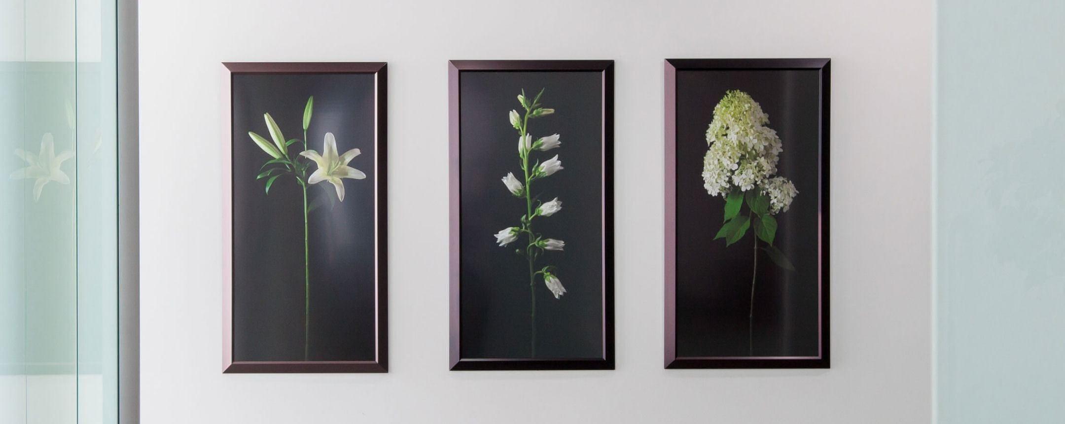 Arlington VA Dentist Office flower pictures